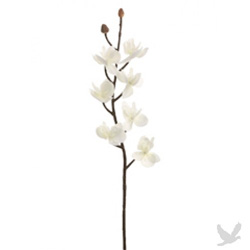 Orchid branch with white phalaenopsis orchids.