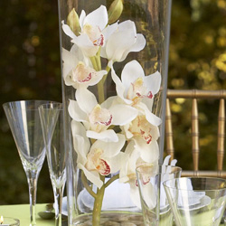 Cymbidium orchid spray