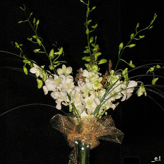White orchids in a tall centerpiece.