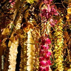 Orchid garland decorations.