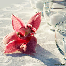 Single orchid on a table.