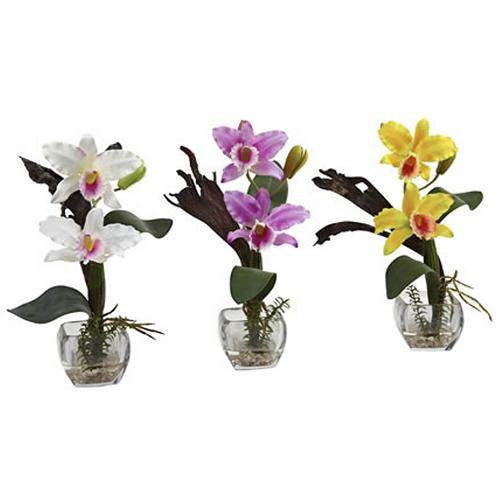 mini-cattleya-orchid