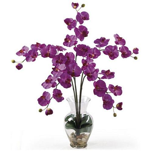 purple-phalaenopsis