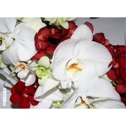 White and Burgundy Orchid Wedding Bouquet