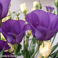 Purple Wedding Flowers - Lisianthus